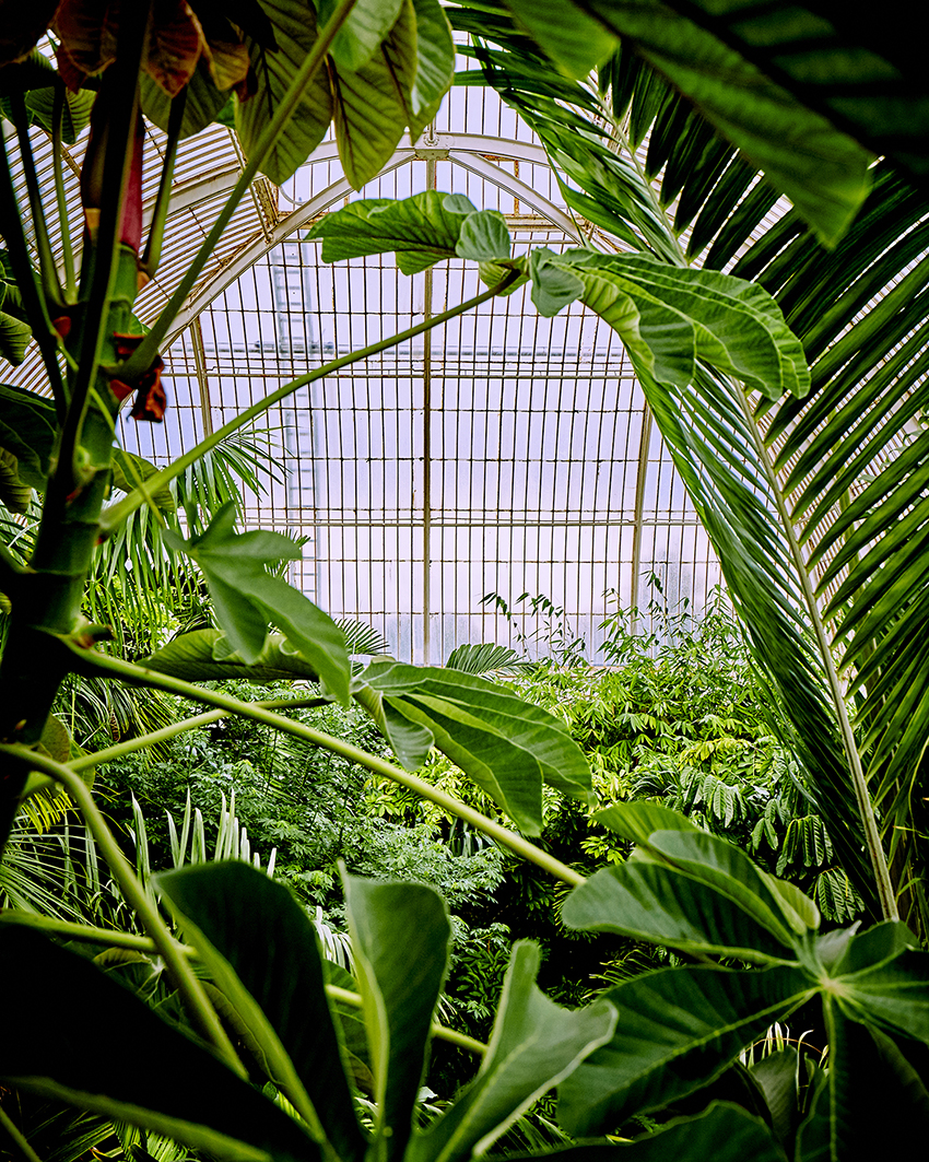 Beautiful Botanical